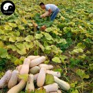 Buy Honey Pumpkin Seeds 120pcs Plant Diabetes Vegetable Melon Cucurbita Moschata