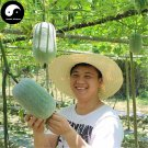 Buy Benincasa Hispida Seeds 50pcs Plant Melon  Vegetable Benincasa Hispida