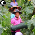 Buy Big Benincasa Hispida Seeds 100pcs Plant Melon  Vegetable Black Benincasa Hispida