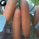 Buy Gold Cucumber Seeds 200pcs Plant Melon Vegetable Cucumis Sativus