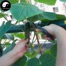 Buy Fruit Cucumber Seeds 100pcs Plant Melon Vegetable Cucumis Sativus