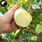 Buy Cut Melon Seeds 120pcs Plant Melon Vegetable Luffa Cylindrica