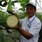 Buy Cut Melon Seeds 240pcs Plant Melon Vegetable Luffa Cylindrica