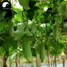 Buy Short Loofah Melon Seeds 200pcs Plant Melon Vegetable Luffa Cylindrica
