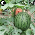 Buy Watermelon Fruit Seeds 50pcs Plant Citrullus Lanatus Small Red Meat Watermelon