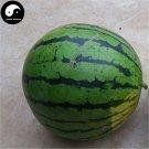 Buy Watermelon Fruit Seeds 100pcs Plant Citrullus Lanatus Big Round Watermelon
