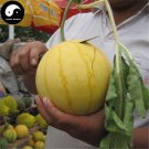 Buy Watermelon Fruit Seeds 100pcs Plant Citrullus Lanatus Yellow Skin Watermelon