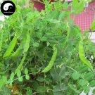 Buy Snow Peas Vegetable Seeds 200pcs Plant Green Dutch Beans Pisum Sativum