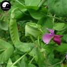 Buy Snow Peas Vegetable Seeds 50pcs Plant Green Dutch Beans Pisum Sativum