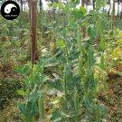 Buy Snow Peas Vegetable Seeds 100pcs Plant Sweet Beans Lathyrus Odoratus