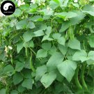 Buy White Kidney Beans Vegetable Seeds 50pcs Plant Phaseolus Vulgaris White Beans