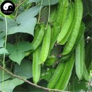Buy Dragon Beans Vegetable Seeds 120pcs Plant Psophocarpus Tetragonolobus