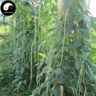 Buy Green Long Beans Vegetable Seeds 100pcs Plant Cowpea Vigna Unguiculata