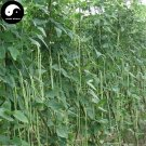 Buy Green Long Beans Vegetable Seeds 200pcs Plant Cowpea Vigna Unguiculata