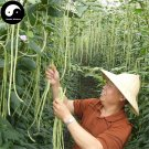 Buy Green Long Beans Vegetable Seeds 400pcs Plant Cowpea Vigna Unguiculata