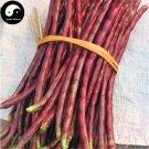 Buy Red Long Beans Vegetable Seeds 200pcs Plant Cowpea Vigna Unguiculata
