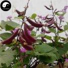 Buy Purple Moon Beans Vegetable Seeds 100pcs Plant Lentils Bean Lablab Purpureus
