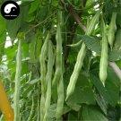 Buy Green Season Beans Vegetable Seeds 200pcs Plant Phaseolus Vulgaris Bean