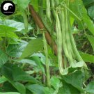 Buy Green Season Beans Vegetable Seeds 50pcs Plant Phaseolus Vulgaris Bean
