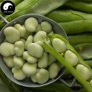 Buy Broad Beans Vegetable Seeds 50pcs Plant Horse Bean Vicia Faba