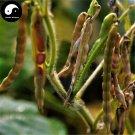 Buy Red Adzuki Bean Vegetable Seeds 600pcs Plant Chinese Bean Vigna Angularis