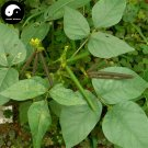 Buy Green Bean Vegetable Seeds 600pcs Plant Chinese Bean Vigna Radiata