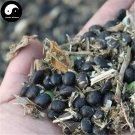 Buy Black Soya Bean Vegetable Seeds 100pcs Plant Chinese Bean Glycinemax