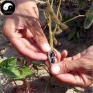 Buy Black Kindly Bean Vegetable Seeds 200pcs Plant Chinese Bean Phaseolus Vulgaris