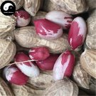 Buy Color Peanut Fruit Seeds 60pcs Plant Chinese Earth Bean Groundnut Arachis Hypogaea