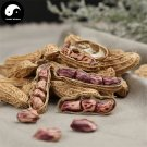 Buy Color Skin Peanut Fruit Seeds 60pcs Plant Chinese Earth Bean Groundnut Arachis Hypogaea