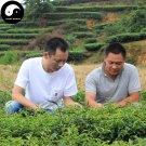 Oolong Tea Ben Shan 100g Chinese Anxi Kungfu Wulong Tea Se Zhong Cha