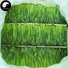 Green Tea Monkey Tea 250g Chinese Green Tea Tai Ping Hou Kui