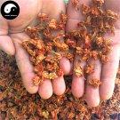 Luo Han Guo Hua 羅漢果花, Flos Grosvener Siraitia, Momordicae Flower 100g
