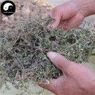 Di Jin Cao 地錦草, Humifuse Euphorbia Herb, Herba Euphorbiae Humifusae 100g
