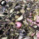 Huang Mao Er Cao 黄毛耳草, Herba Hedyotidis Chrysotrichae, Goldhair Hedyotis Herb 100g