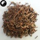Da Fei Yang Cao 大飛揚草, Herba Euphorbiae Hirtae, Garden Euphorbia Herb 500g