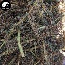 Ye Xian Cai 野莧菜, Wild Amaranthus Viridis, Herba Amaranthus, Ci Xian 500g
