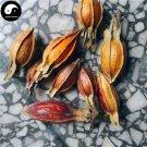 Zhi Zi 梔子, Shan Zhi, Fructus Gardeniae, Cape Jasmine Fruit 200g