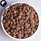 Rui Ren 蕤仁, Nux Prinsepiae, Hedge Prinsepia Nut 200g