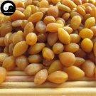 Bai Guo Ren 白果仁, Semen Ginkgo, Yin Xing 银杏, Ginkgo Biloba Seed 100g