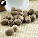 Nan Suan Zao 南酸枣, Guang Zao, Fructus Choerospondiatis, Wu Yan Guo 500g