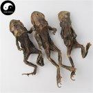 Chan Chu 蟾蜍, Toad, Dried Medicine Ha Ma 500g