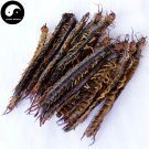 Wu Gong 蜈蚣, Dried Centipedes, Scolopendra Subspinipes 10pcs