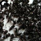 Guangxi Hei Ma Yi 黑蚂蚁, Polyrachis Ants, Black Ant 100g