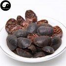Tu Bie Chong土鳖虫, Tu Yuan, Di Bie Chong, Ground Beetles 100g