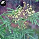 Buy Acacia Mearnsii Tree Seeds 30pcs Plant Acacia Mearnsii For Hei Jing Shu