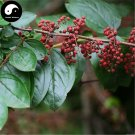 Buy Coriaria Nepalensis Tree Seeds 60pcs Plant Coriaria Nepalensis For Ma Sang