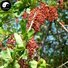 Buy Coriaria Nepalensis Tree Seeds 30pcs Plant Coriaria Nepalensis For Ma Sang