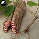 Buy Millettia Dielsiana Tree Seeds 40pcs Plant Suberect Spatholobus Stem For Ji Xue Teng