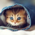 Cute Cat Baby Art 32x24 Poster Decor